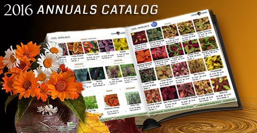 Our 2015 Annuals Catalog!