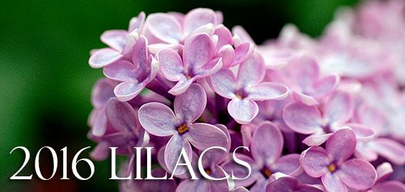 2015 LILACS!