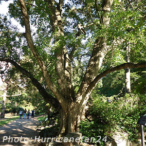Search Trees, Shrubs by Height - Acorn Farms wholesale trees