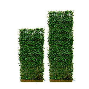 green living fence info