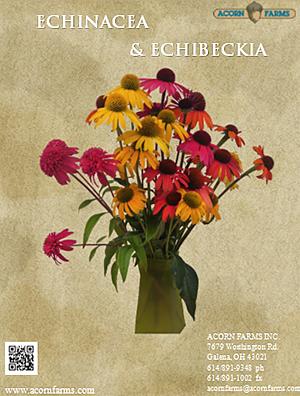 2016 Echinacea