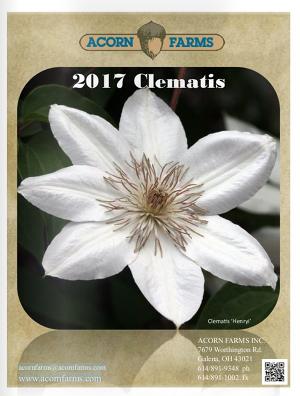 2017 Clematis