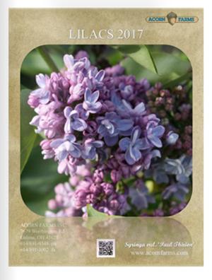 2017 Lilacs