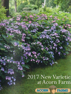 2017 Trees/Shrubs