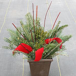 10 inch evergreen container