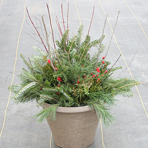 13 inch evergreen container