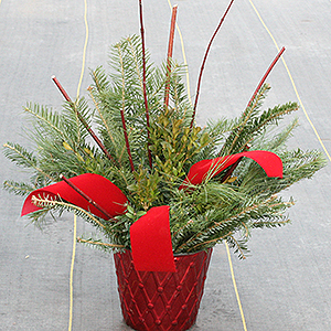 6 inch evergreen container