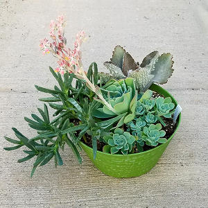 10in Succulent Bowls