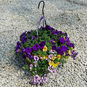 14in Moss Hanging Baskets