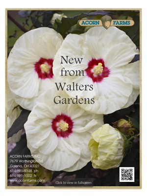 New Plants from Walters Gardens