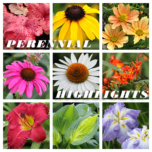 Perennial Highlights