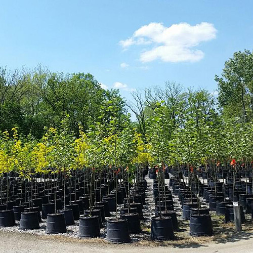 container trees