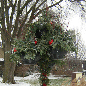 winter evergreen municipal insert