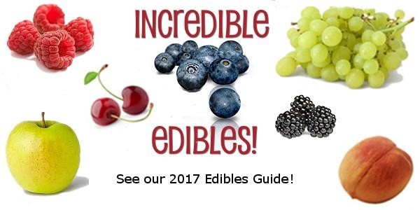 2017 Edibles