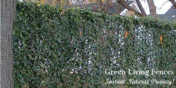 Green Living Fence