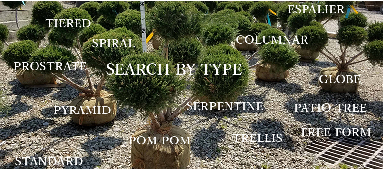 Plant by Type