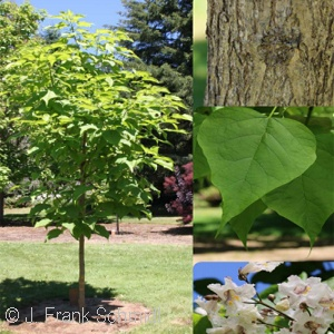 CATALPA SPE HEARTLAND