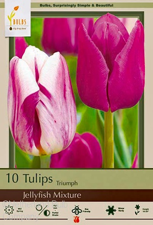 TULIP JELLYFISH MIX