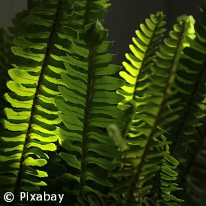 FERN TRUE BOSTON