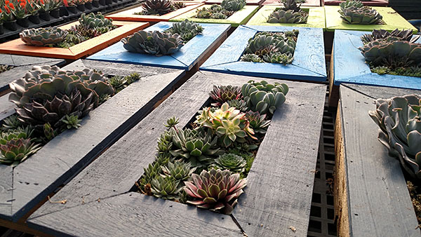 ANNUAL SUCCULENT PICTURE FRAME