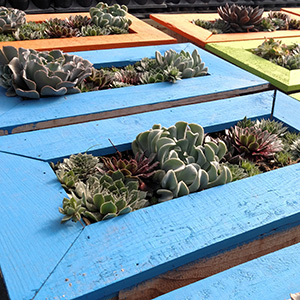12 inch succulent picture frames