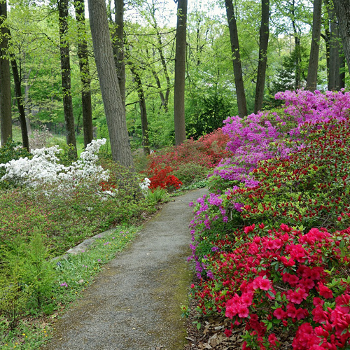 Native plants to the PA region