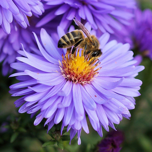 Pollinators for the PA - Pennsylvania area