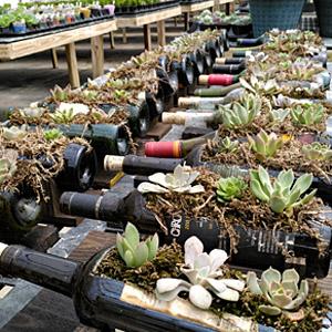 wine bottle succulents