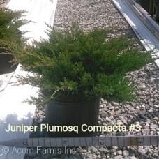 JUNIPERUS HOR PLUMOSA COMPACTA