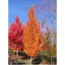 ACER FRE ARMSTRONG GOLD