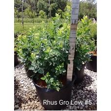 RHUS AROMATICA GRO-LOW