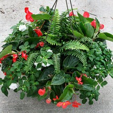 ANNUAL HANGING BASKET SHADE